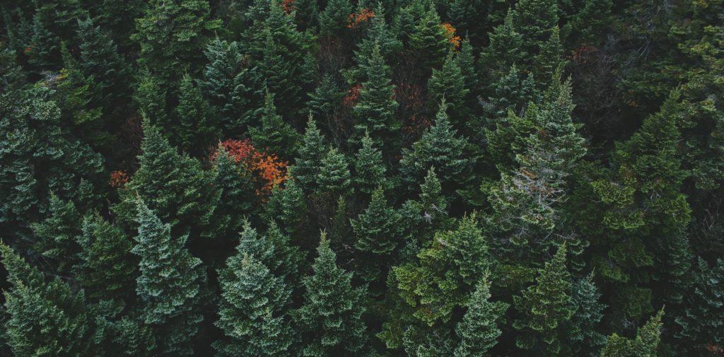 Floresta Aleatória